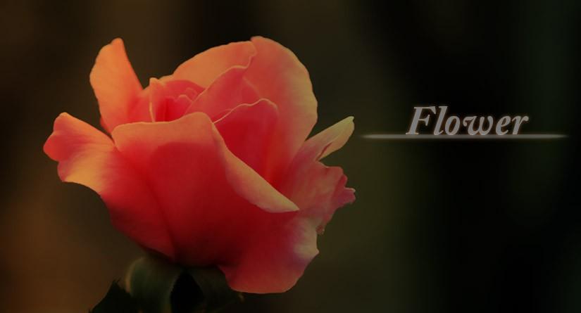 書籍 『永沢まことの花のスケッチレッスン』 を読む