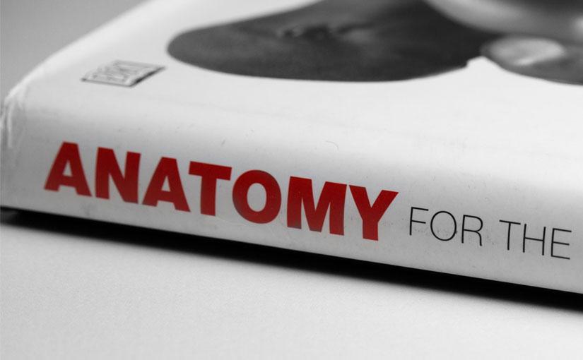 人体の参考資料として重宝している書籍『Anatomy for the Artist(英語版)』
